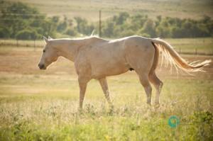 terolyn horse rescue adopt a horse